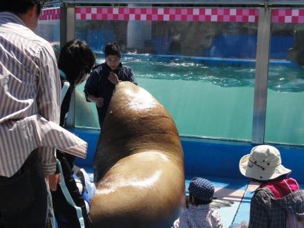 大きい!触りたい!